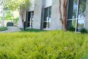 Living Trust and Estate Planning Attorneys in Folsom, California